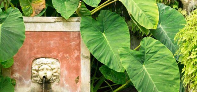 Il 25 maggio in Viaggio con Mosquito ai Giardini della Minerva e Certosa di Padula