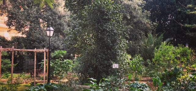 Giardino botanico veneziani